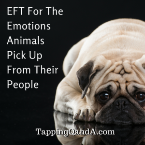 EFT For The Emotions Animals Pick Up From Their People